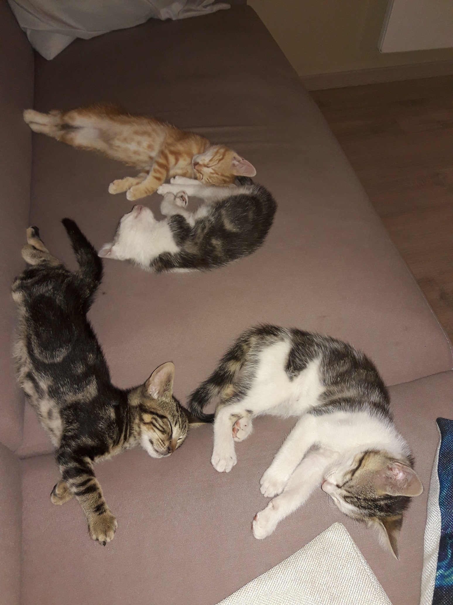 Photo don objet -Donne 4 chatons